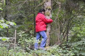 JURA 2014 Jacques enlace un arbre