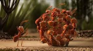 dynamique-de-groupe-fourmis