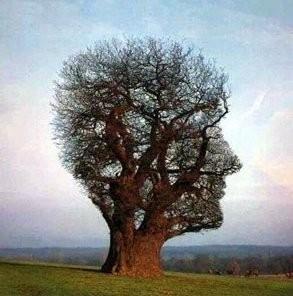 humanité arbre homme